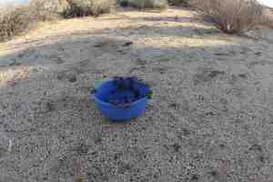 Hunter's water bowl was taken over by thirsty bees. They drank the whole thing dry in about two hours.