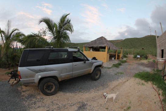 12.This is a picture from before the storm. You see a happy dog, happy trees, and a full roof on the kitchen. If you look closely you can also see a palapa up on the hill, which is not there anymore.