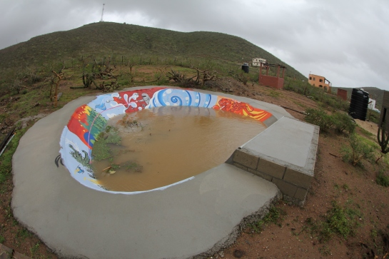 The skate bowl in the back yard has turned into a pool, or more accurately a pond.